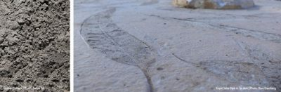 Portland Cement – CEM II 42.5 NAM-SLV